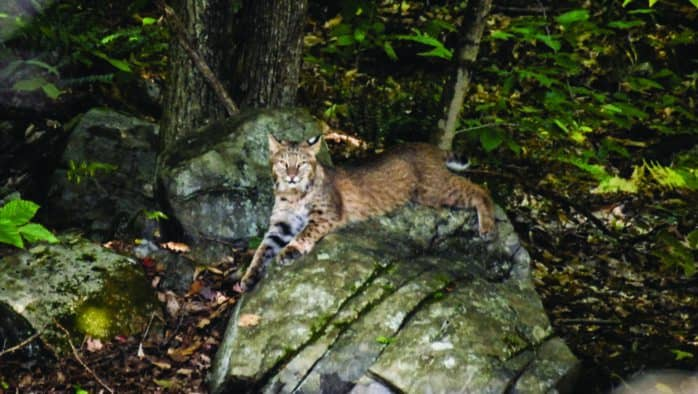 Proctorsville resident talks about photographing local wildlife