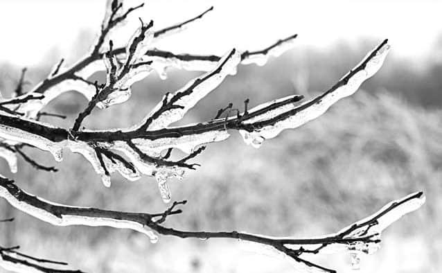 Winter tree identification workshop offered in Woodstock