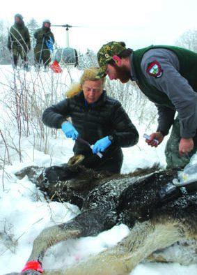 Vermont Fish & Wildlife initiates moose study