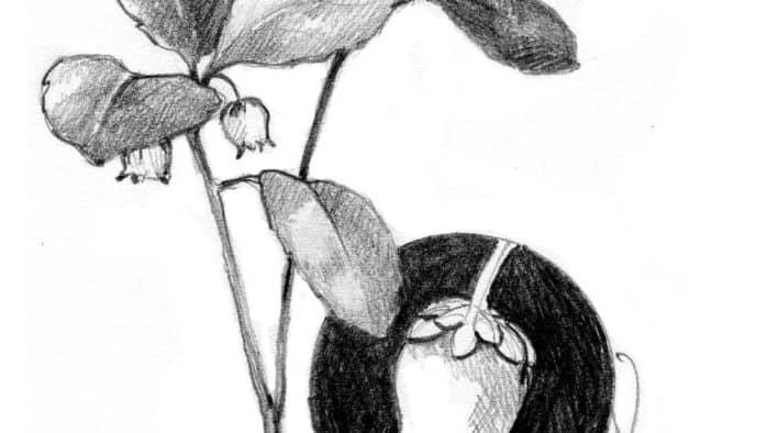The nostalgia of wintergreen