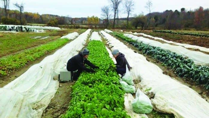 Rutland Area Farm and Food Link faces funding gap