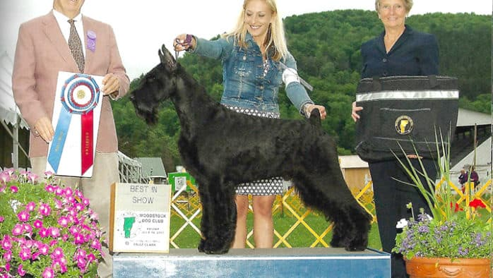Hundreds of dogs to compete at Vermont Scenic Circuit Dog Show