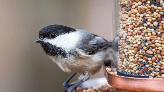 VINS hosts bird feeding 101: A how-to workshop