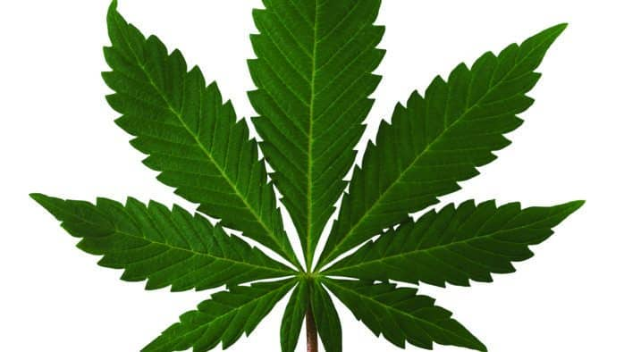 Ludlow PD presents on drug trends and marijuana laws