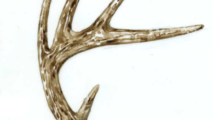 The Outside Story: All about antlers
