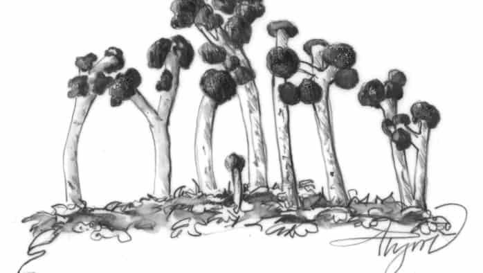 British soldier lichens provide color pop