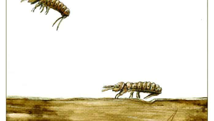 The Outside Story: Springtails: Tiggers of the invertebrate world