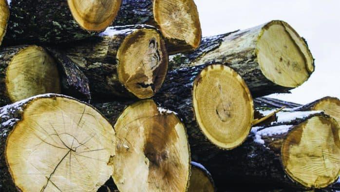 Municipal logging considered in Chittenden
