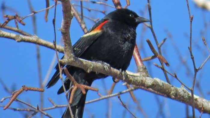 Rutland County Audubon & Slate Valley Trails host birdwalk, May 18