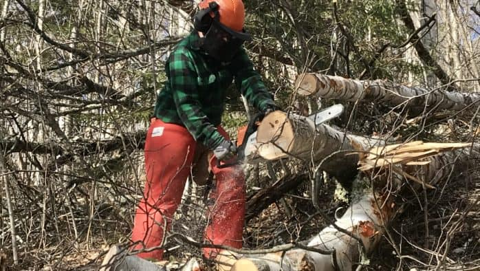 There is always more chainsawing