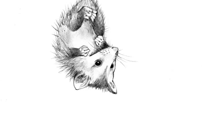 Animal tails and the tales they tell