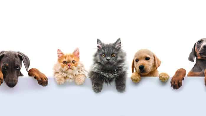 Caring for pets, livestock in the time of coronavirus