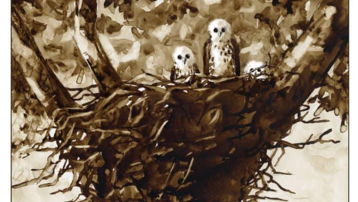 Broad-winged hawks: secret nesters