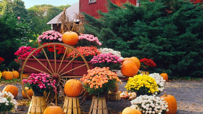 Decorating for autumn using brilliant natural colors