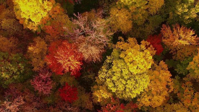 "It's fall foliage time, so go on be a ""leaf peeper"""