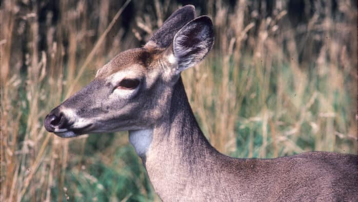 Unallocated antlerless deer permits available