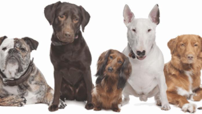 The Dog Wizard Rutland opens to provide transformative dog training service
