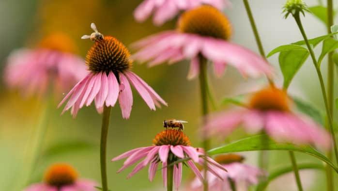 Flower gardens – the half way mark!