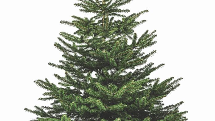 Don't miss the Killington-Pico Rotary tree sale