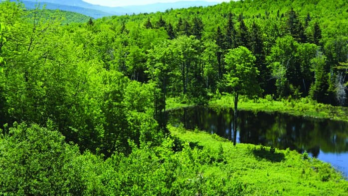 State purchase of Okemo State Forest tract completes 100-mile wildlife corridor