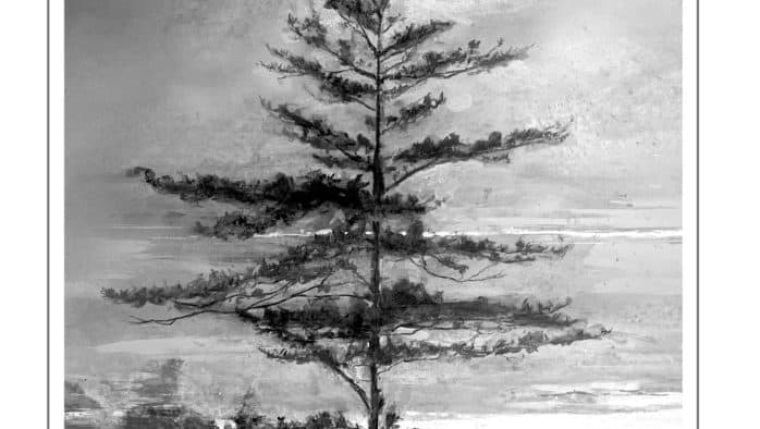 Eastern white pine: the Northeast's tallest conifer