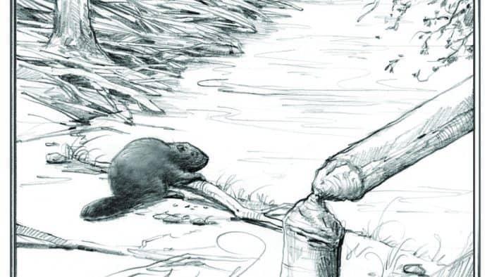 Beavers: landscape engineers
