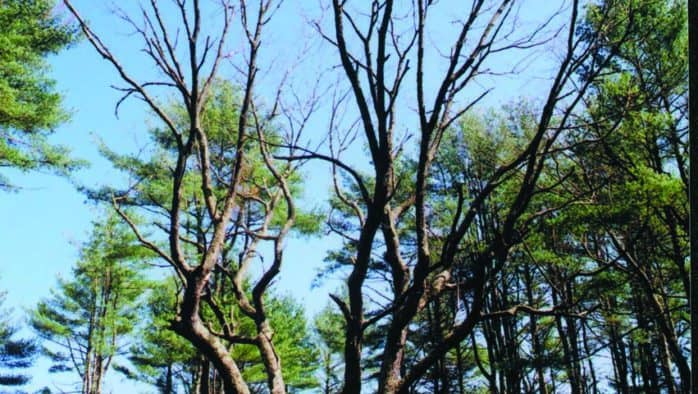 Trees – you can bank on them