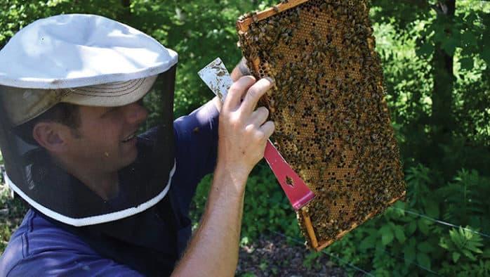 Billings Backyard Series presents beekeeping and pollinators with Troy Hall