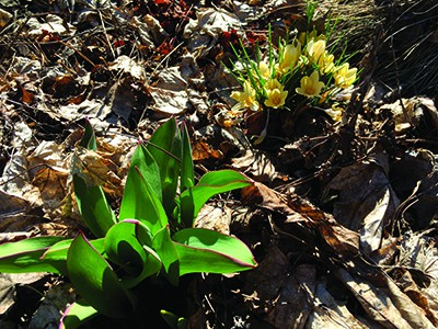 Spring cleanup will produce better gardens