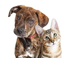 Let RCHS help find homes for your kittens and puppies!