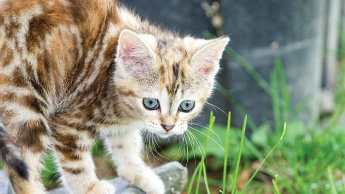 RCHS can help with feral cats
