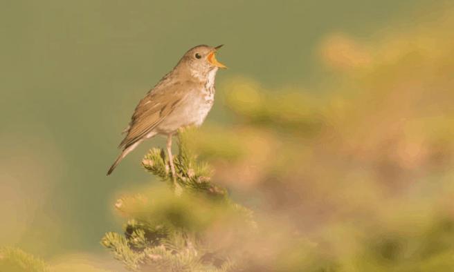 Audubon hosts monitoring walk at West Rutland Marsh
