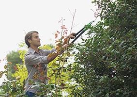 There is a season, prune, prune, prune