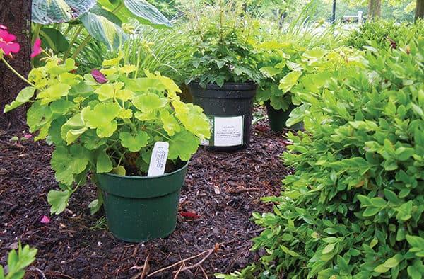 Sharing your garden creates memories between neighbors