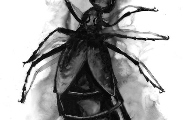 Blister beetles use chemical defense to deter predators