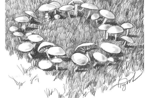 Fungi and fairy rings appear
